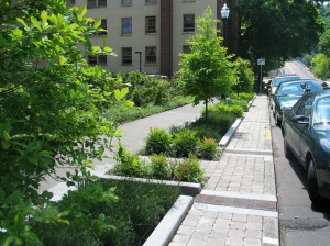 Stormwater diverted to bioretention can decrease run-off, replenish groundwater, and feed carbon-capturing plants